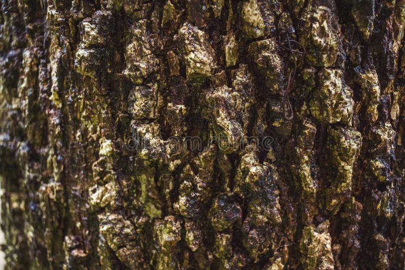 Green MOSS on tree bark in the rain forest. Abstract, aging, antique, autumn, background, beautiful, brown, close, close-up, closeup, color, cracked, design stock photos