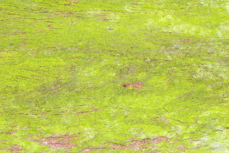 Download Green Moss Tree Trunk Texture Stock Photo - Image: 13498708