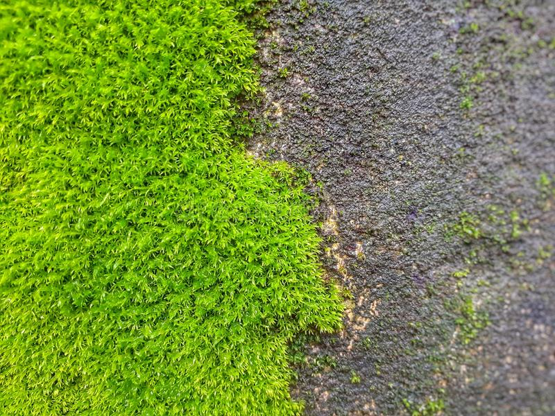 Green moss on the wall royalty free stock images