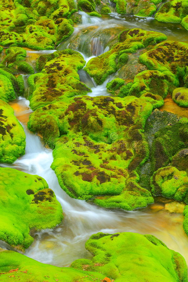 Download Green Moss With Water Stream Royalty Free Stock Photo - Image: 23435105