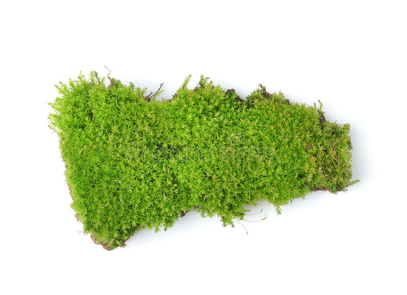 Green moss on white bakground royalty free stock images
