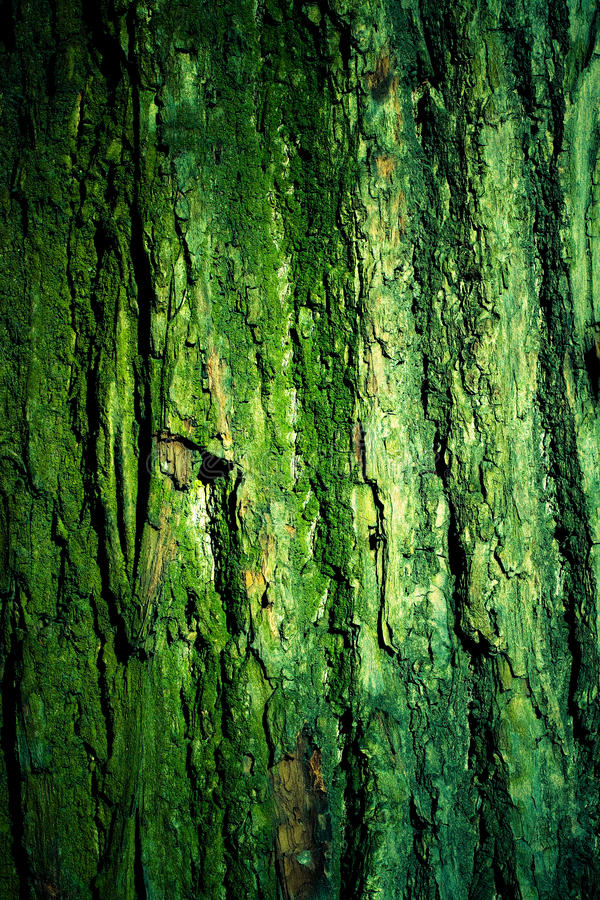 Download Green Mossy Tree Bark Texture Stock Photo - Image: 13447618