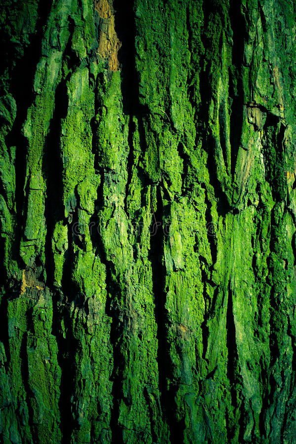 Download Green Mossy Tree Bark Texture Stock Photo - Image of nature, background: 13447726