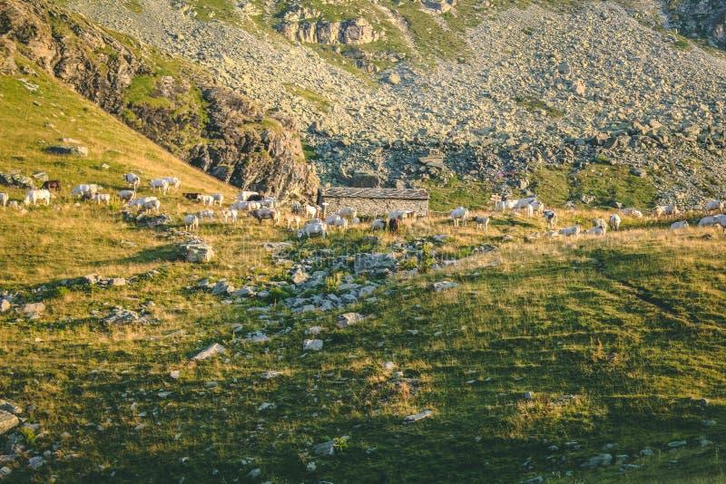 Green Mountain Free Public Domain Cc0 Image