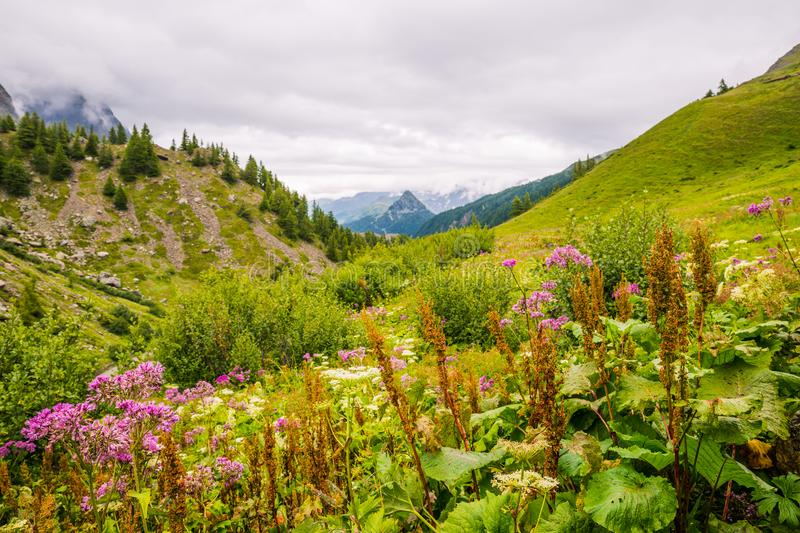 Green Mountain Landscape with Spring Flowers in Iconic Mont-Blanc Trail.  royalty free stock image