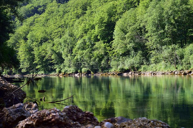 Green mountain river Drina with surrounding trees. The mountain river Drina colored by reflection of the surrounding trees stock photo