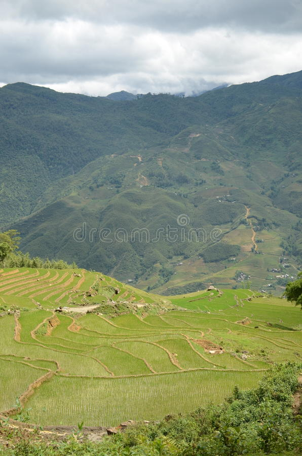 Green mountains and rice fields in Vietnam. Green mountains and rice fields near Sapa, Vietnam royalty free stock photos