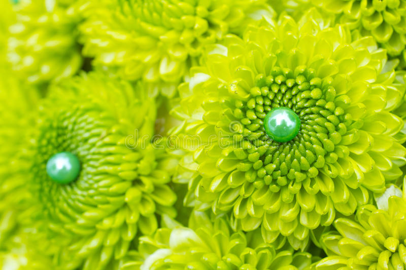 Download Green Mum Flowers stock photo. Image of green, floral - 28426334