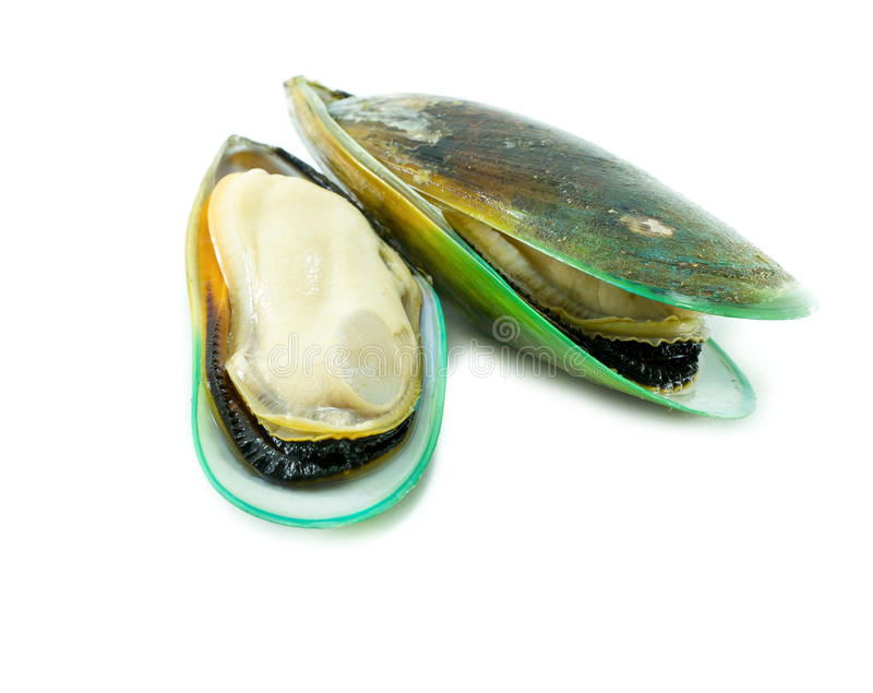 Green mussel stock photo. Image of isolated, mussel