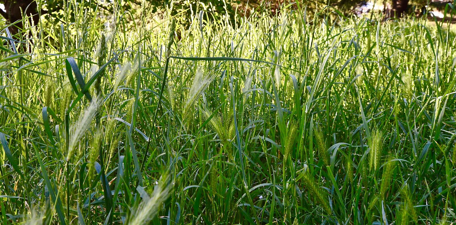 Green Natural background royalty free stock photo