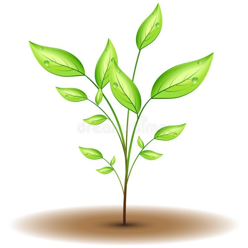 Green natural flower stock illustration
