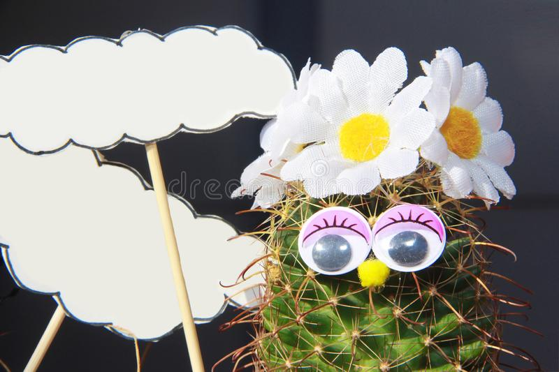 Green natural funny cacti with flowers and decorative elements. Green natural funny cacti with flowers and decorative a elements royalty free stock photos