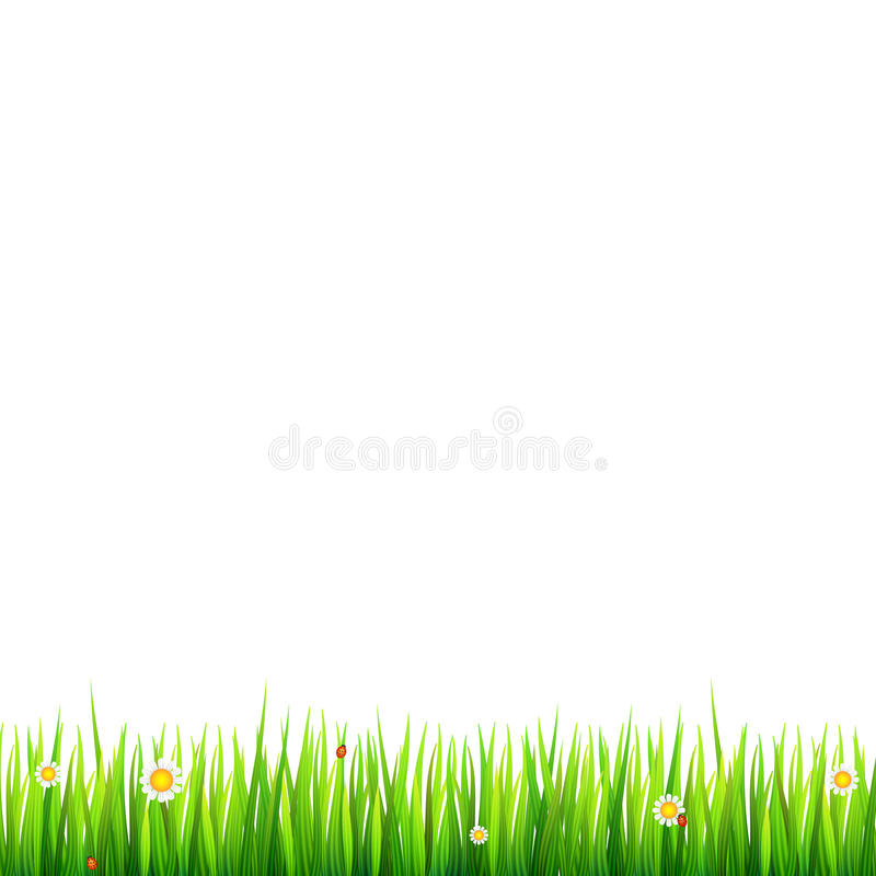 Green, Natural Grass Border With White Daisies, Camomile Flower And ...