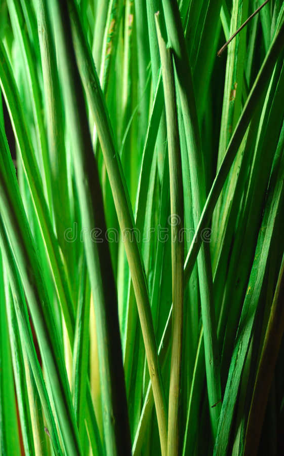 Green nature royalty free stock images