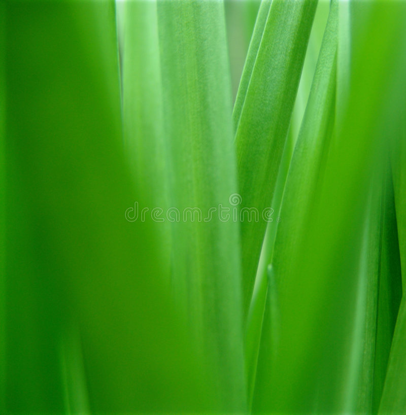 Green nature. royalty free stock image