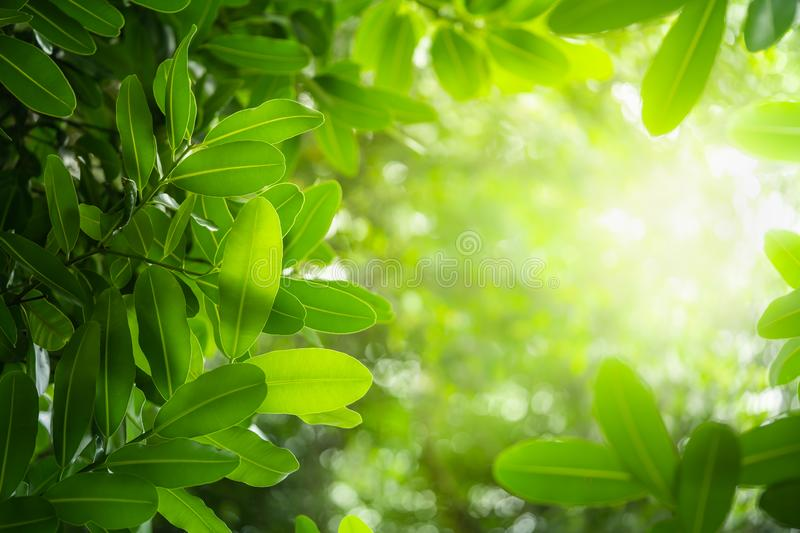 Natural green plants landscape background. Closeup nature view of green leaf on blurred greenery background in garden with copy space using as background royalty free stock photo