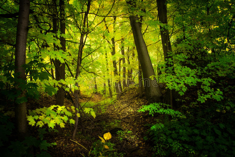 Green nature background on forest. Along with old tree trunks and green leaves, yellow leaves royalty free stock photo