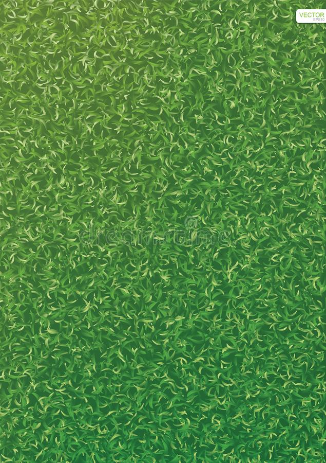 Green nature lawn grass texture and pattern for background. Vector. Green nature lawn grass texture and pattern for background. Vector illustration vector illustration