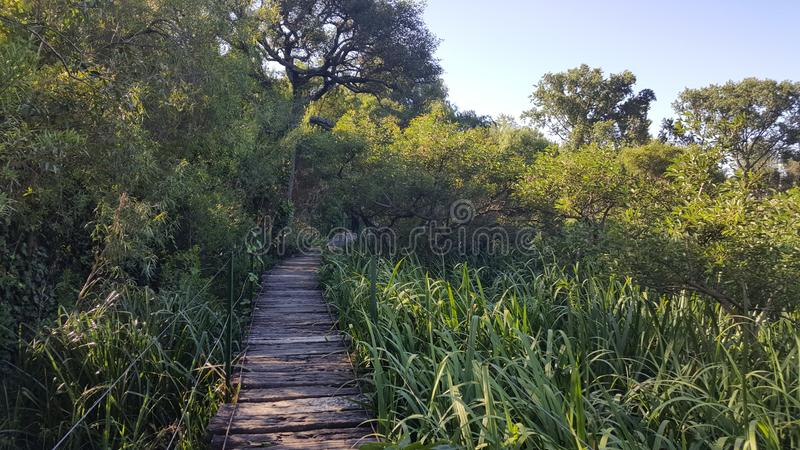 Green nature outdoors forest vegetation park wood pier bridge path still life stock image