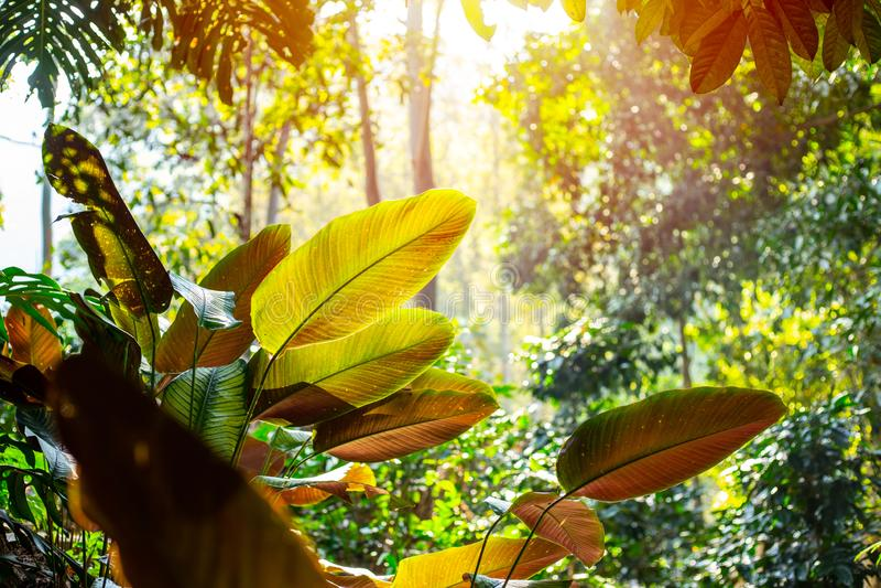 Green nature rain forest tropical green tree sun morning stock photos