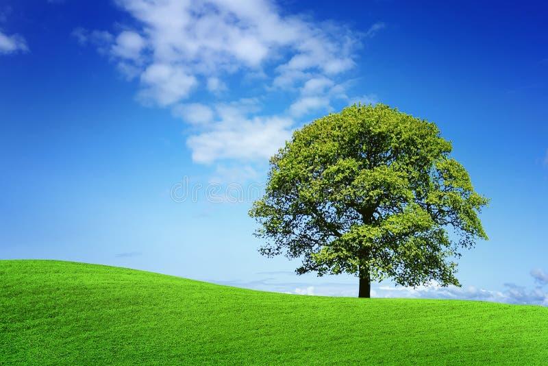 Green nature stock photos