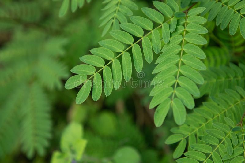 Green nature tropical fresh leaves in forest . stock images