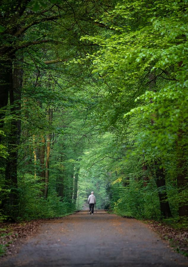 Green, Nature, Woodland, Forest stock photos