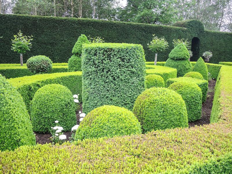 Green nice garden with hedges cut very accurately. The beautiful Green nice garden with hedges cut very accurately royalty free stock images
