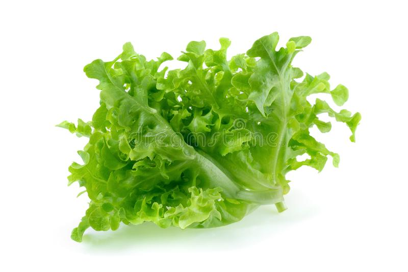 Green oak leaf lettuce isolated on a white background stock photo