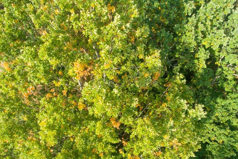Green oak leaves stock image