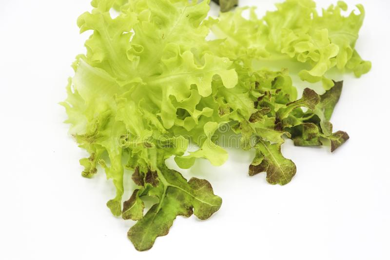 Green oak and rea oak lettuce vegetable salad isolate on white background royalty free stock image