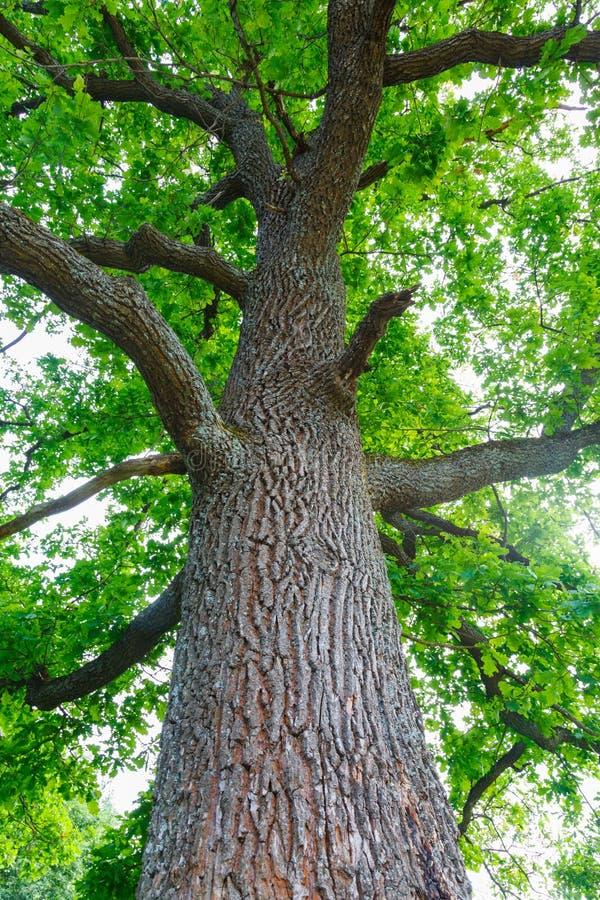 Download Green Oak Tree Stock Photo - Image: 34480730