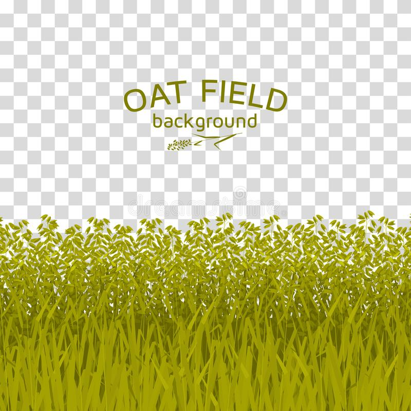 Green oat field on checkered background vector illustration