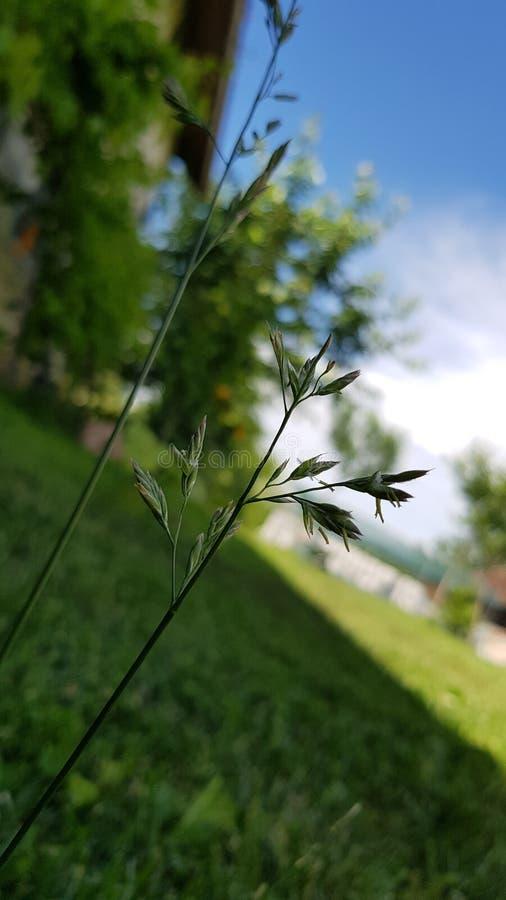 green ogrodowa obraz stock