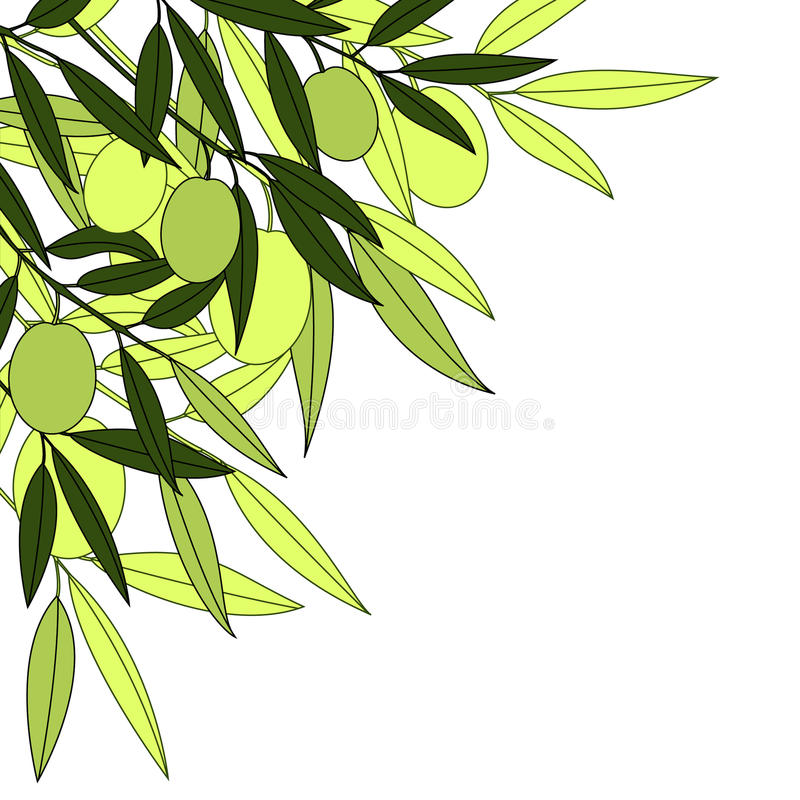 Green olive stock illustration