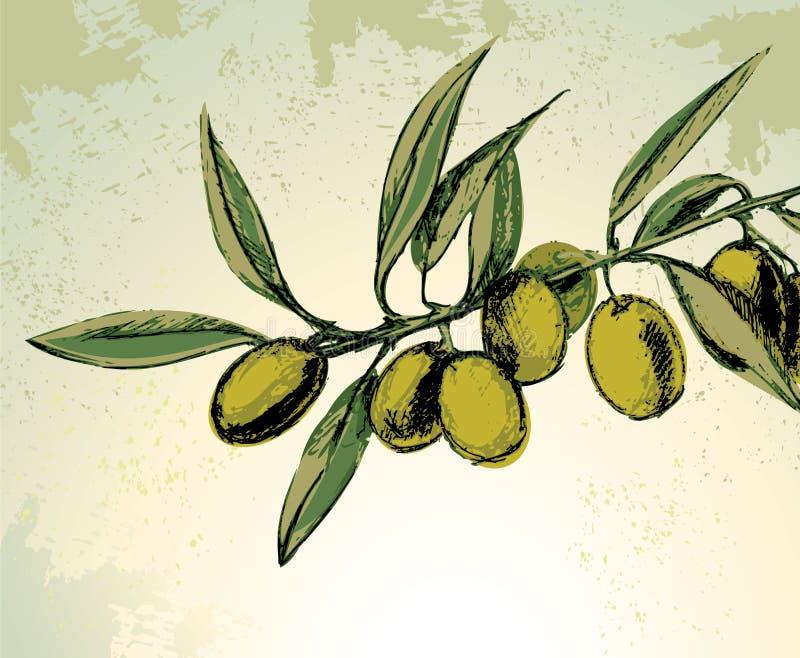 Green olives. Vector illustration of green olives
