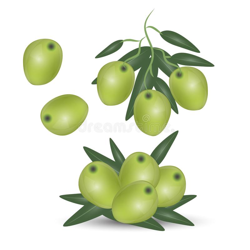 Green olives branch isolated on white background. Design for olive oil, cosmetics, health care products. royalty free illustration
