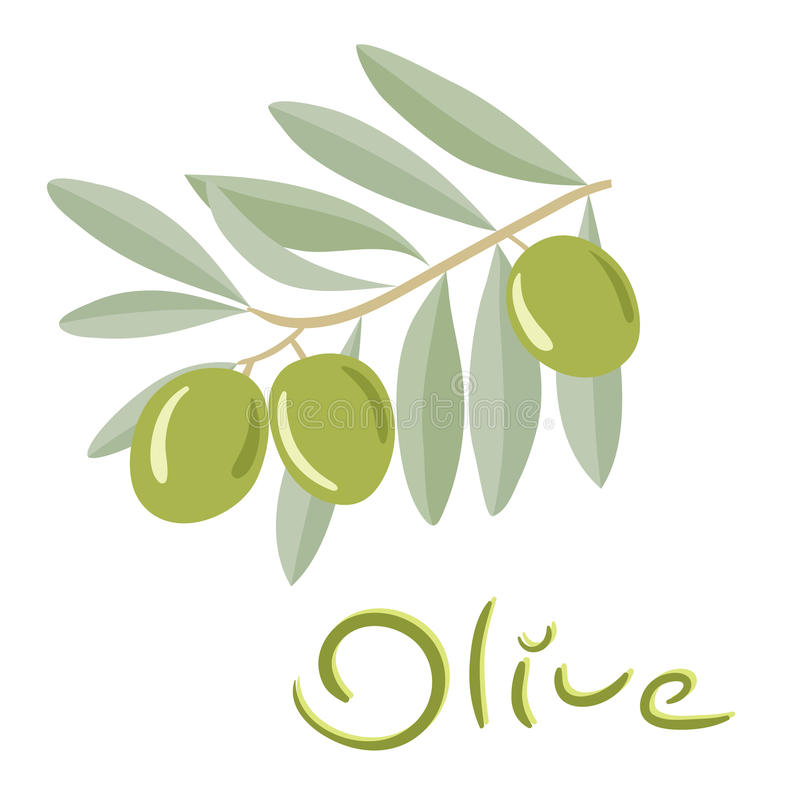 Green olives on a branch with leaves vector illustration