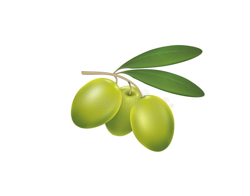 Green olives on a white background royalty free illustration