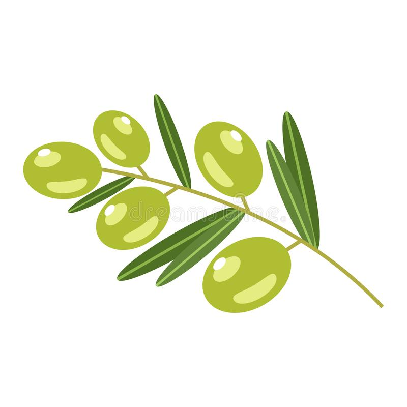 Green olives on a white background. royalty free stock photos