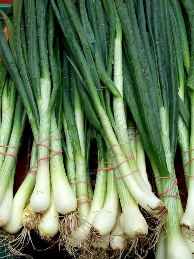 Green onion. Ready to be sell on vegetable market stock image