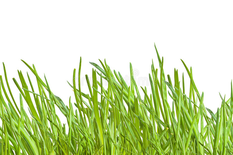 Download Green onion stock photo. Image of isolated, smell, macro - 18453914