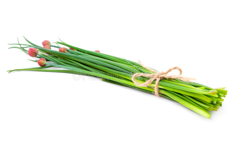 Green onion (Chive). On the white background stock photo