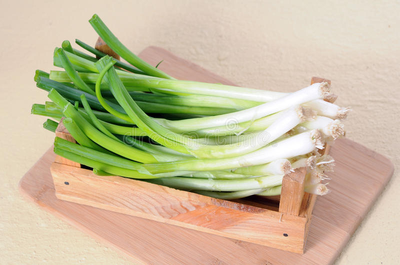 Green onion roots stock photography