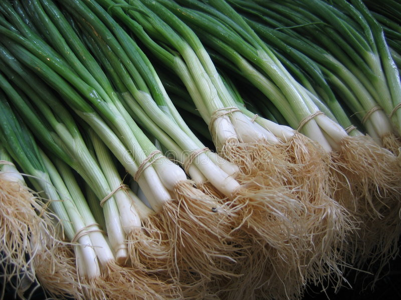 Green onions stock photos