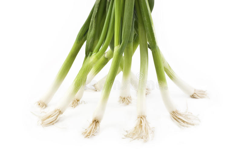 Download Green Onions On White Background Stock Photo - Image: 13033420