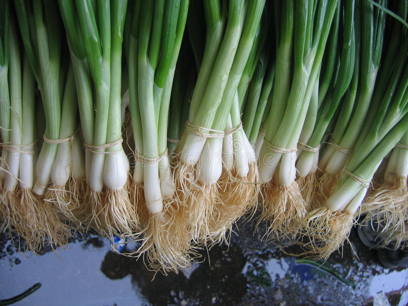 Green_onions2.jpg photo libre de droits