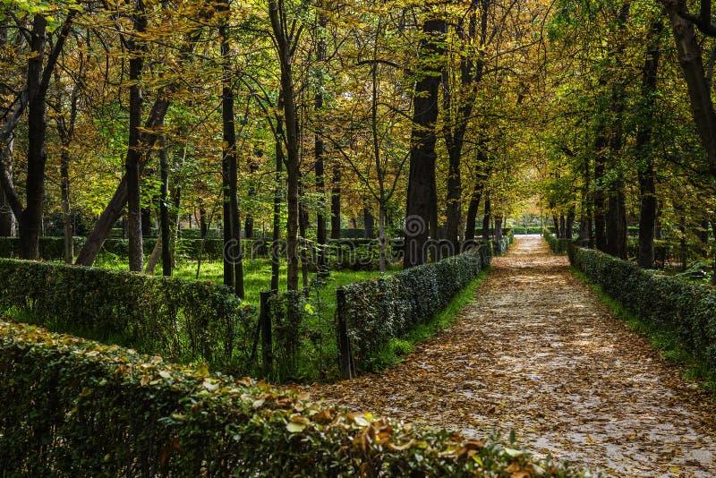 Green an orange forest of retiro park in madrid spain - Madrid forest ...