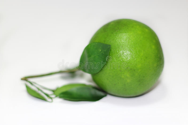 Green orange with leaves royalty free stock image