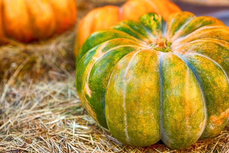 Green orange pumpkin and orange lies on dry hay autumn background royalty free stock image